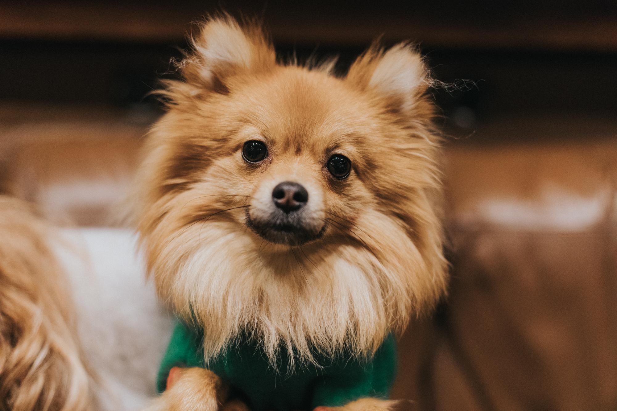 Dog Friendly Finnieston
